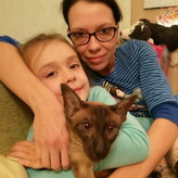 Oriental cattery review, Oriental kitten from Cataristocrat cattery