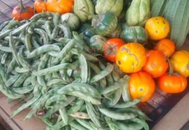 panen sayuran