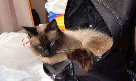 Department of Catland Security TSA Agent Poppy