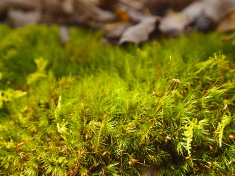 moss up close and personal