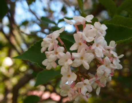 pretty flowering tree