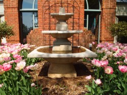 Tulips and fountain