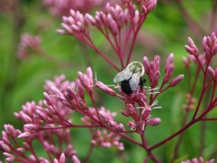 bumblebee heaven