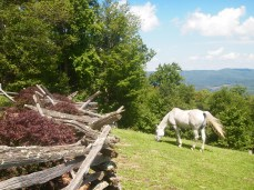 Horse at Laurel Point B&B