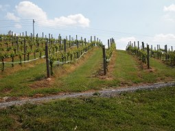 Creek's Edge Winery