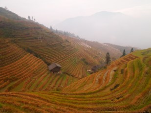 Rice terraces at Ping'An