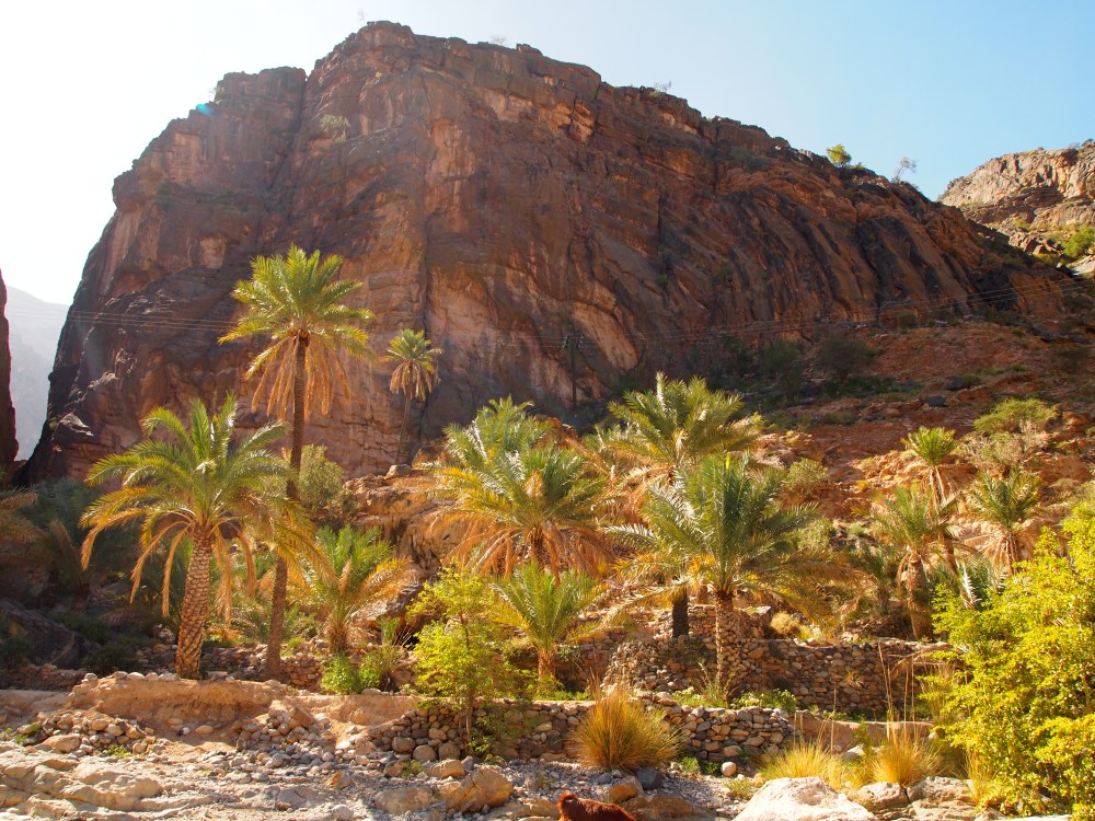 a treacherous drive through wadi bani awf: a near-tragedy, the picturesque village of balad sayt & a glimpse of the infamous snake canyon (4/6)
