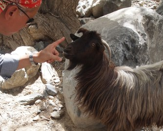 a hand reprimanding a goat in the Hajar Mountains, Oman