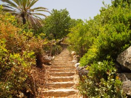 following the endless steps to the top of Wekan's gardens in Oman