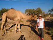 camel encounter