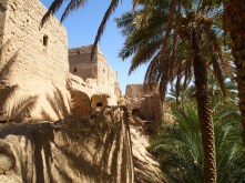 ruins and shadows of date palms