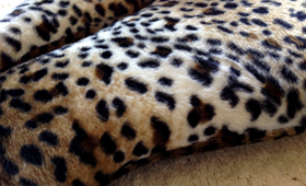 Leopard Cat Bed