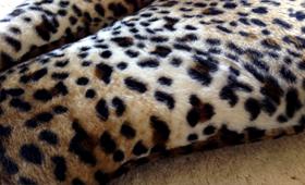 Leopard Cat Bed