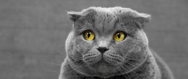 Gray cat who looks sad