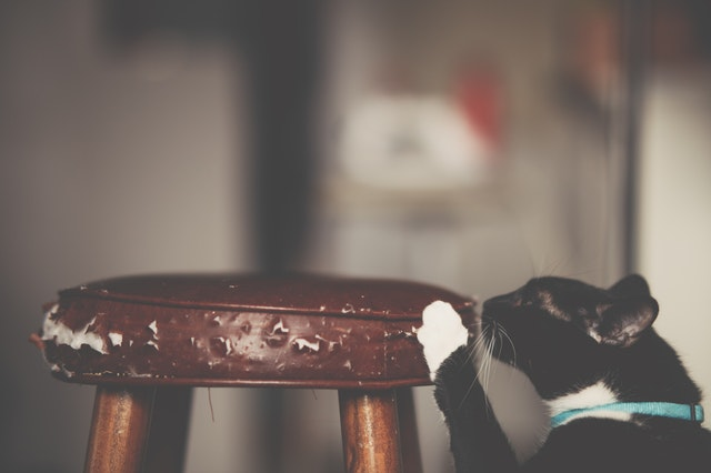 how to stop a cat from scratching furniture