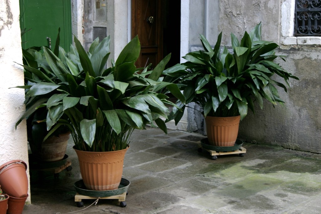 house plants that are safe for cats