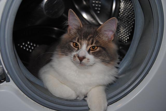 cat in the dryer
