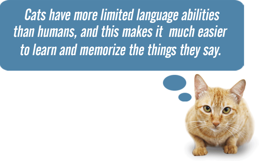 The Cat Language Bible: Read & Reviewed 4