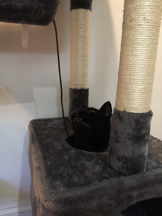 Yaheetech Cat Tree Review - From A Cat & Her Human 8