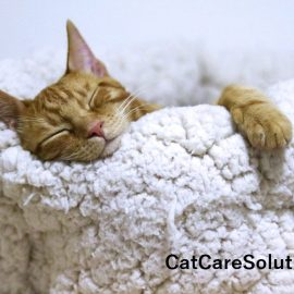 7 Cheap Cat Beds That Aren't Cheaply Made 1