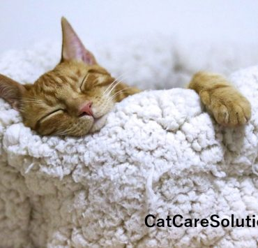 7 Cheap Cat Beds That Aren't Cheaply Made 3