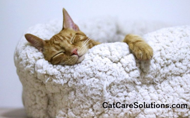 7 Cheap Cat Beds That Aren't Cheaply Made 2