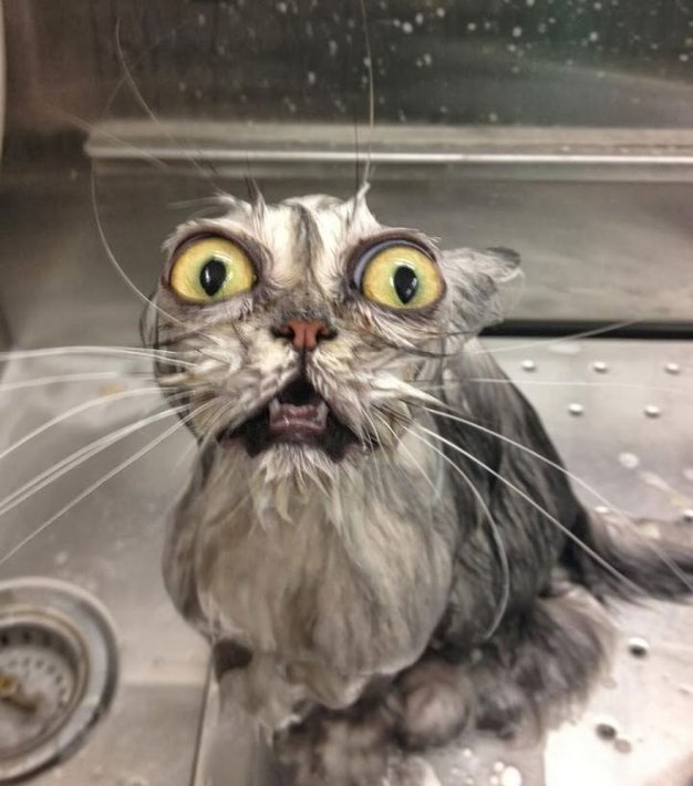 funny cats in baths