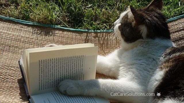 The Literate Cat 1