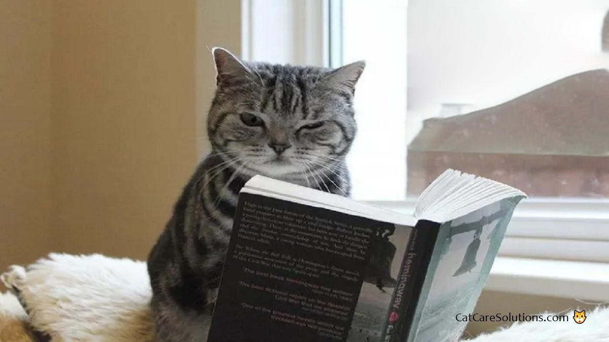 cat reading book