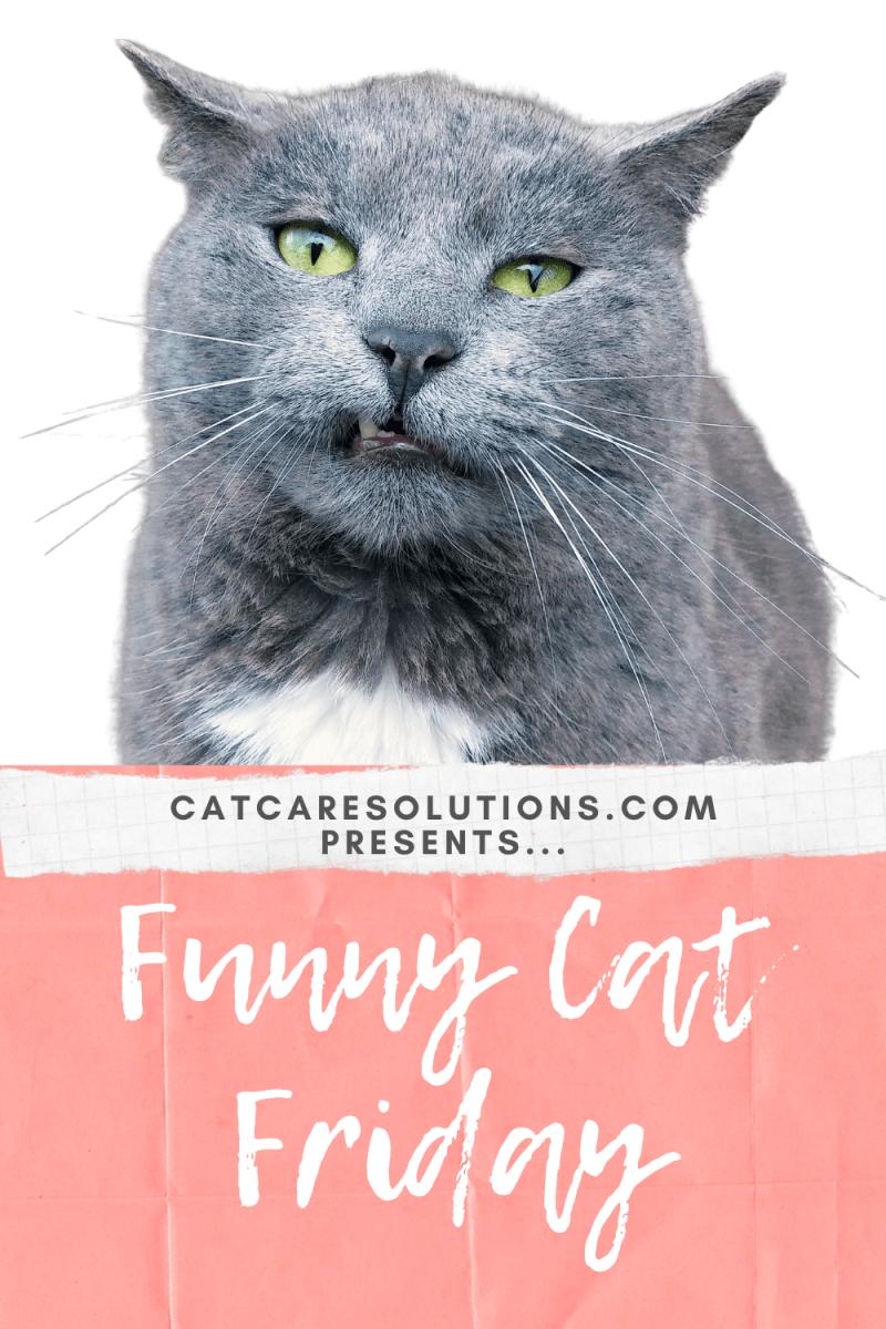 funny cat friday: bohemian catsody