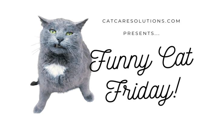 funny cat friday
