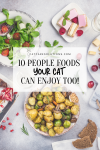 10 People Foods Your Cat Can Eat Too