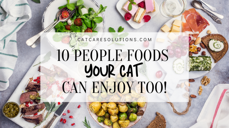 10 human foods cats can eat