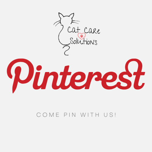 cats on pinterest