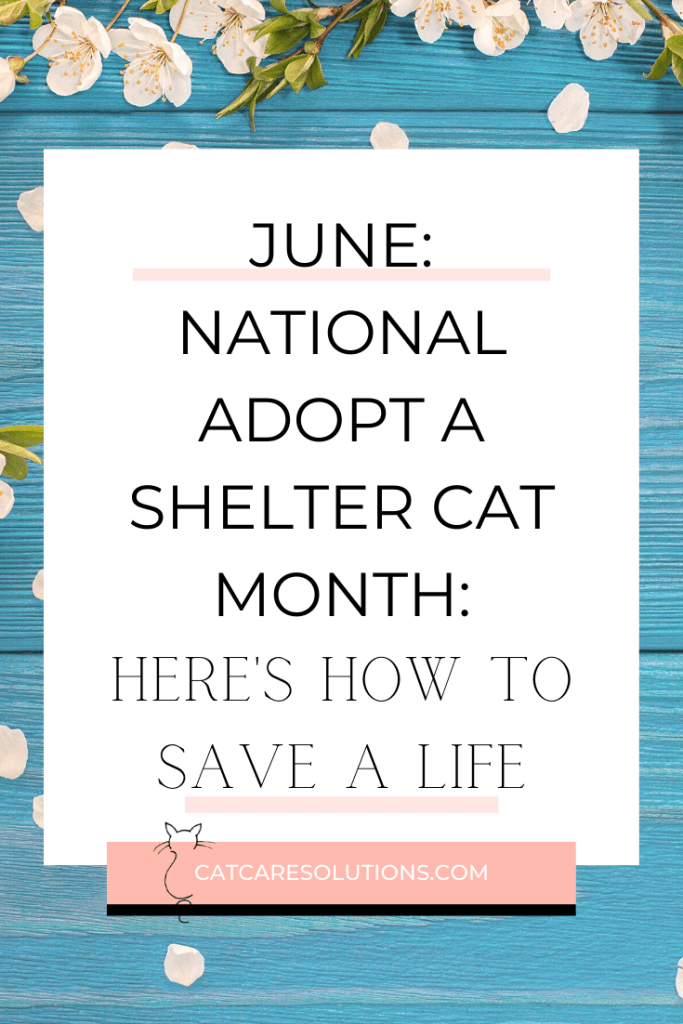 June isn't just bringing us warmer weather! We are excited to be a part of the campaign to find more shelter animals their forever homes. Here's how you can save a life today, even if you can't adopt a pet! #pets #cats #catlovers #adoptdontshop #adoptasheltercatmonth #catblogger #catcaresolutions