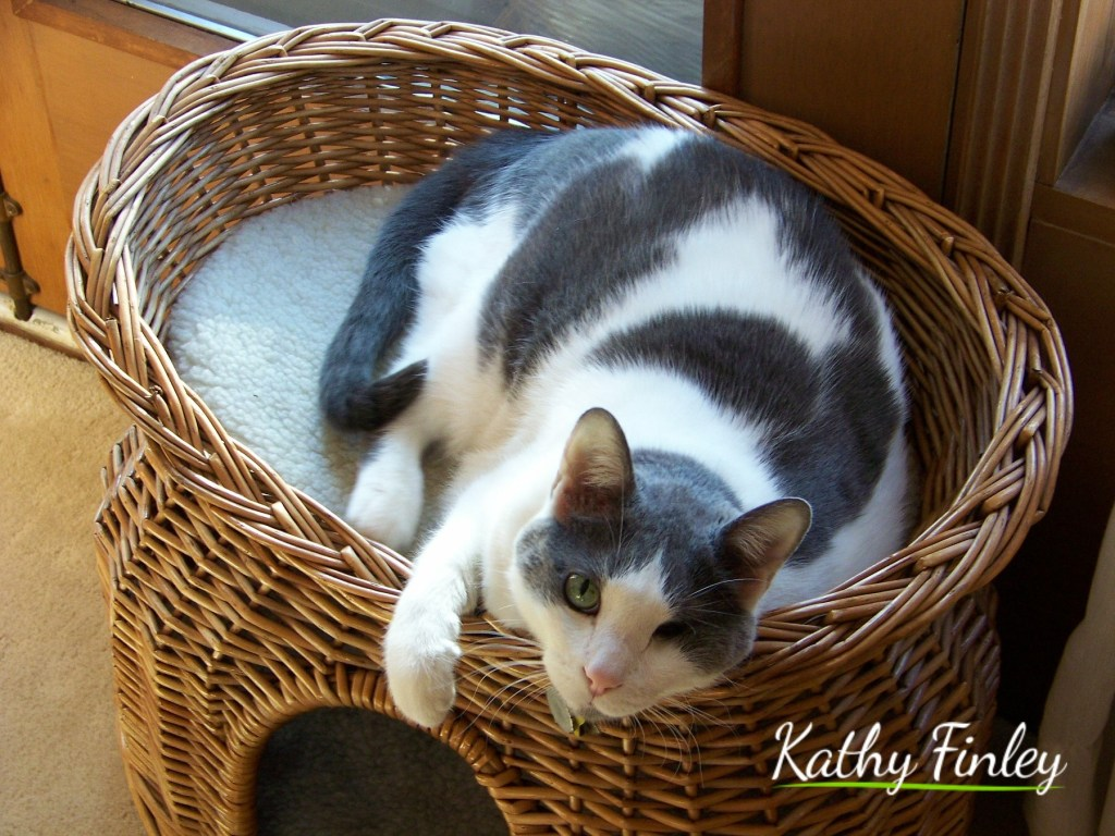 Kathy Finley: Taking the Journey of a Lifetime With A One-Eyed and Three-Legged Cat