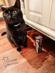 CatSizor Review: How To Trim Cat Nails Quickly and Easily