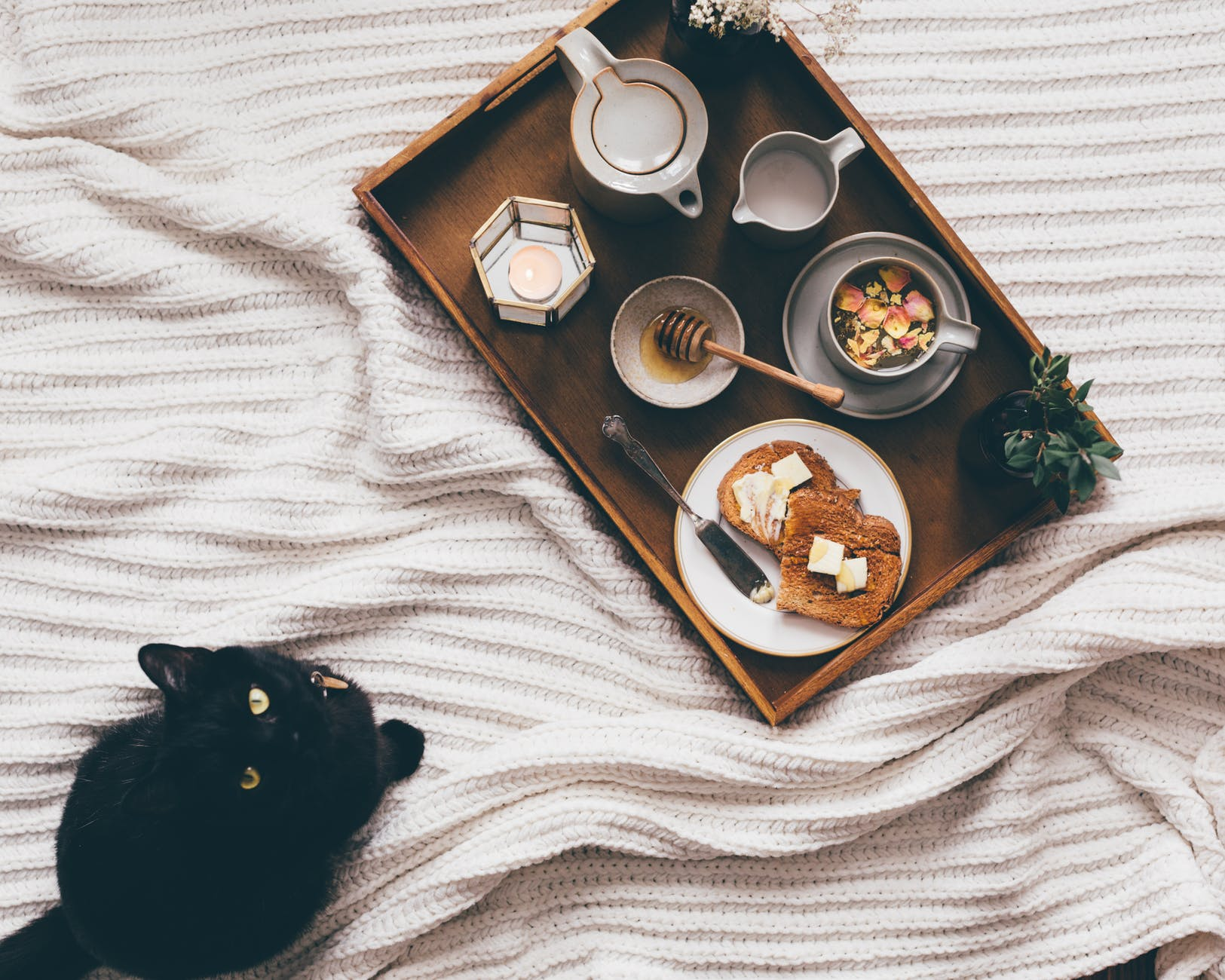 tray with snack near cat on bed