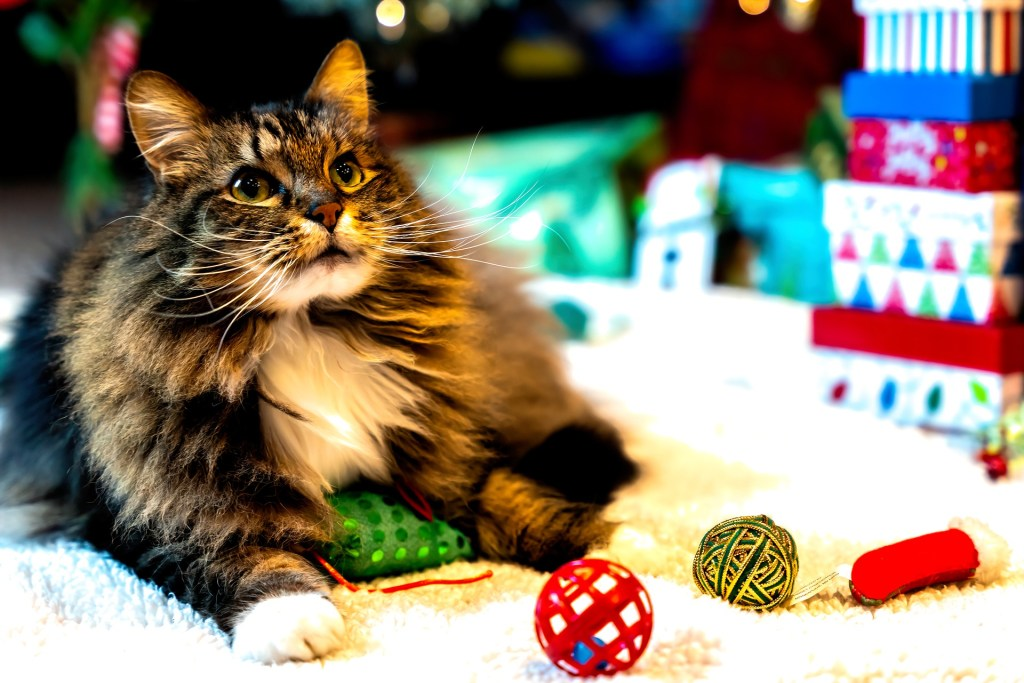 how to keep your cat happy indoors - keep their brains stimulated