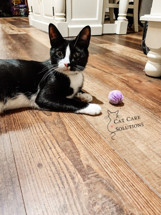 how to keep your cat happy indoors -  pips playing with his fuzzy ball