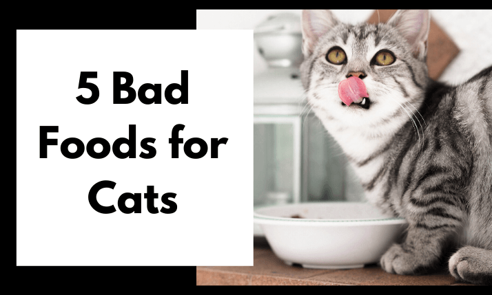 Bad-foods-for-cats