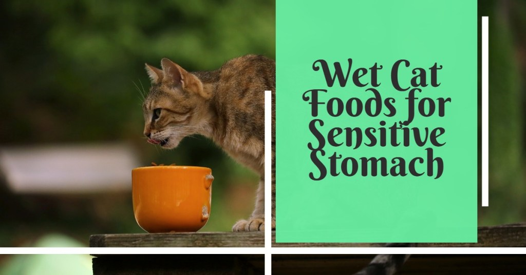 Best Wet Cat Foods for Sensitive Stomach featured image