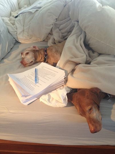 """""""Now I ask you.  What could be better than spending the day on your bed with your dogs and Brad Thor's next best seller?"""" Photo courtesy of  Emily Bestler."""