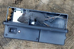 Best Electronic Mouse Traps A Review Of The Good The Bad And The Ugly
