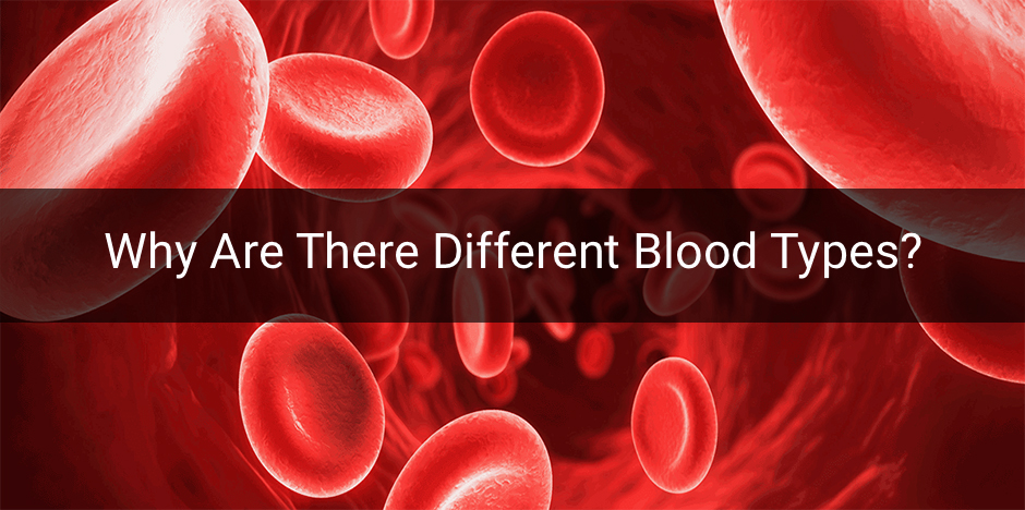 Why Are There Different Blood Types? Image Source: Interactive Biology