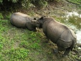 rhino-381_1280