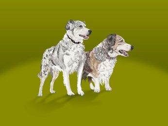 Ilustración Perros. Dogs Illustration