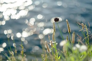 Helen Beatrix Potter 的視点で見る鴨川護岸(うさぎはいないけど)