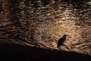 報道されない「京の七夕は8月10日まで」の悲鳴 現地直撃リポート