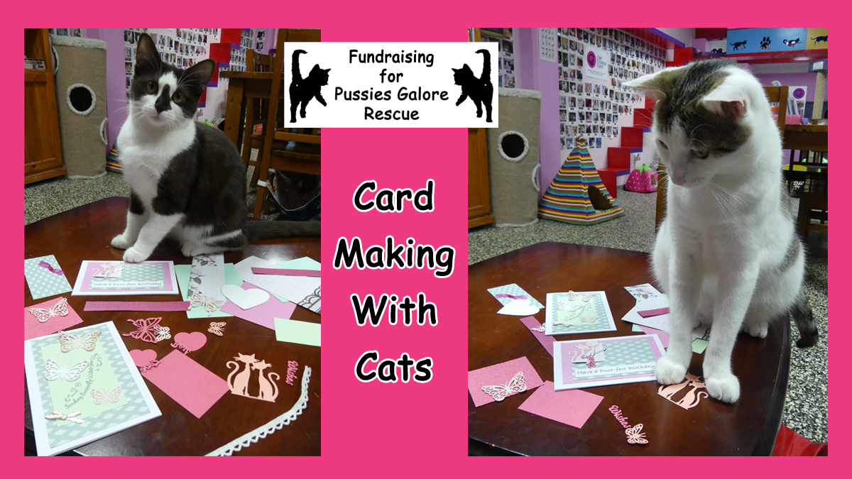 Card Making With Cats